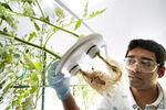 Bayer Pflanzenschutz